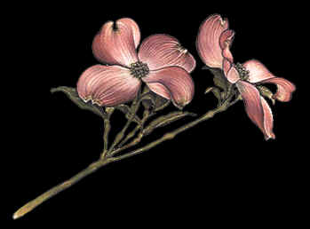 Pink Dogwood Drawing by Terry